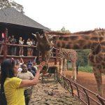 Run like a Kenyan – Part II : les activités incontournables de Nairobi
