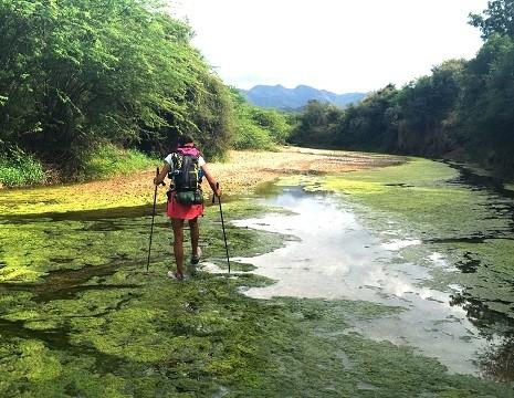 La Bee traverse une rivière couverte d'algues vertes